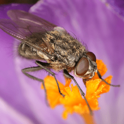 cluster fly on flower