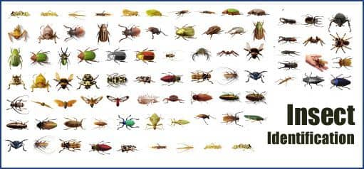Common Insect And Bug Identification | American Pest Solutions