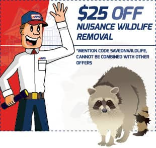$25 off wildlife removal coupon
